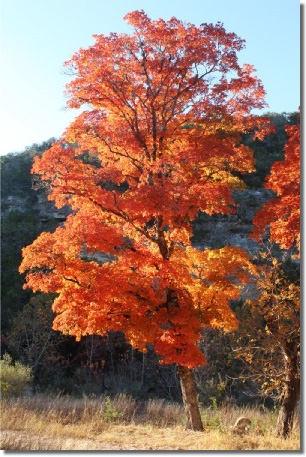 Lost Maples State Park - A camping trip to experience the fall ...