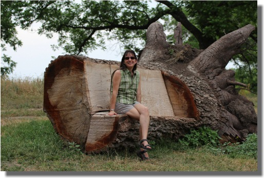 South llano river state park for Tree trunk garden bench